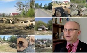 Pusztításnak látszik, pedig ez életmegóvás - kérdések és válaszok a Vásárosnaményban most kivágott fák ügyében