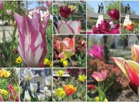 Tavaszi színvarázs és virágharmónia a Bereg szívében, Vásárosnaményban