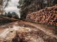 130 kamionnyi fát koboztak el