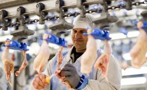 Kisvárda, 2011. március 18. Csirkecombot filéznek a Master Good cégcsoport kisvárdai telephelyén. Az Északkelet-Magyarország területén működő cégcsoport Magyarország legnagyobb baromfihús előállítója és az egyetlen integráltan takarmánytermeléssel, baromfitenyésztéssel, keltetéssel, brojlerhizlalással és feldolgozással foglalkozó cég. A 900 embert foglalkoztató Master Good évente 100 ezer tonna takarmányt termel, 23 millió naposcsibét keltet és forgalmaz, 11 millió brojlercsirkét hizlal és 16 millió baromfit vág le és dolgoz fel. Az energia- és takarmányárak drasztikus emelkedése miatt a Baromfi Termék Tanács szerint tavaszra 20-25 százalékkal emelkedik a baromfihús ára, ezért kérte a miniszterelnöktől a termék áfájának 10 százalékra való csökkentését. 2011. március 16-án készült felvétel. MTI Fotó: Balázs Attila
