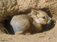 Különleges apróságok születtek a Nyíregyházi Állatparkban