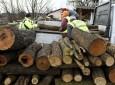 Útmutatóval segíti a Nébih a fakereskedő vállalkozásokat