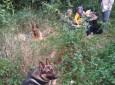 Beregi rendőrkutyák szagolták ki a rejtőzködő migránsokat Beregdaróc és Gelénes között